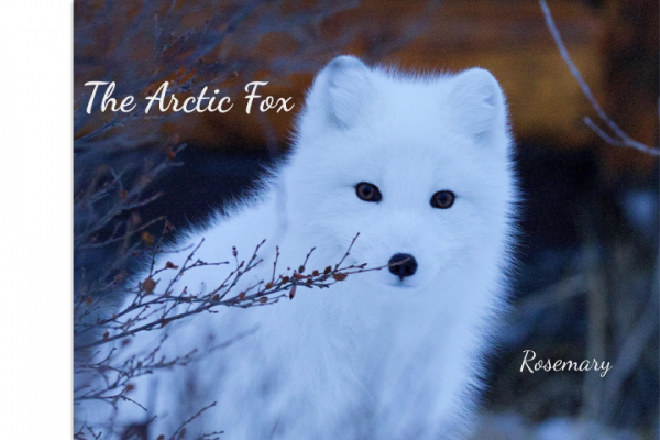 The Arctic Fox.png