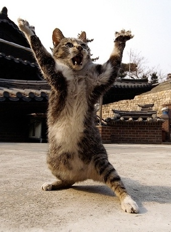 Kung Fu Cat 2 (Closeup).jpg