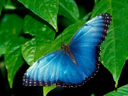 "HD-Blue-Butterfly-Wallpaper-ᢠ€ ""-Wallpaper-HD.jpg"