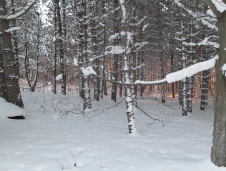 Woodland-Winterscape.jpg