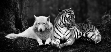 cropped-tiger_and_wolf_by_tyrondane-d6x8a621.jpg
